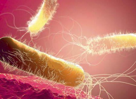 Pseudomonas aeruginosa vo vode